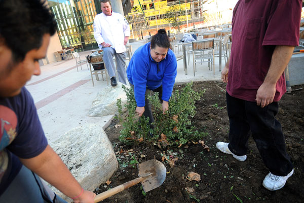 The new Culinary Arts Garden at Los Angeles Mission College. Photo by Andy Holzman for the Daily News.